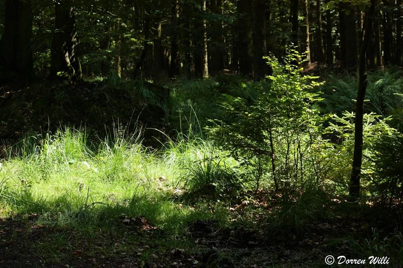 Ballade dans les Hautes fagnes et les sous-bois le 10-08-2011 Img_2685-utilisat...800x600--2bbd7c2