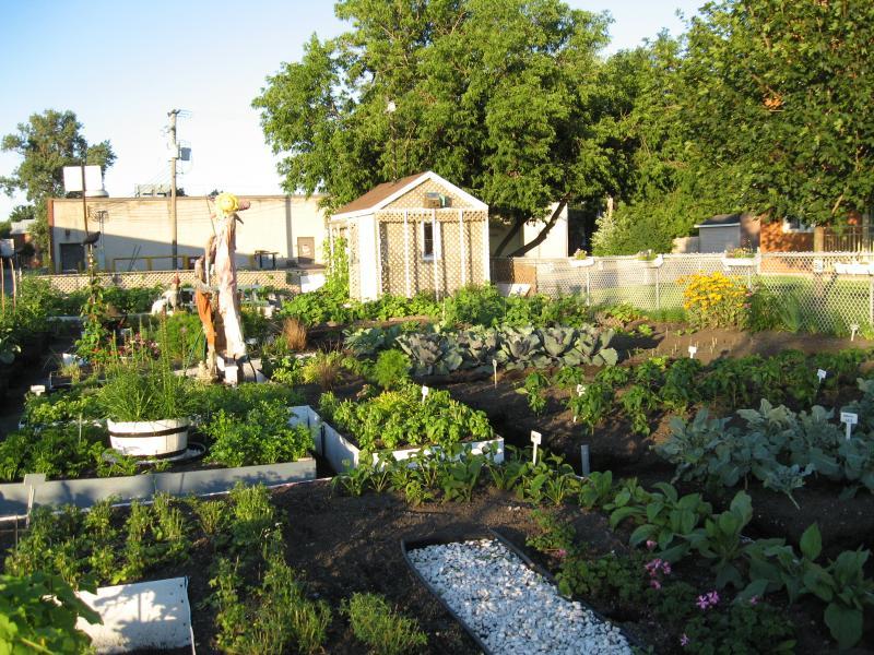 Le Jardin à la brunante (2011) Jardin collectif du Patro Img_2125-2b606ee
