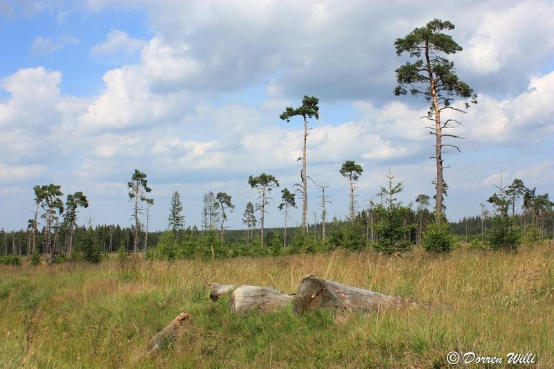 Ballade dans les Hautes fagnes et les sous-bois le 10-08-2011 Img_2752-800x600--2bbd9c4
