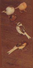 Mon chien Voyou, mes bébés à plumes et compagnie E-et-cie-pounette...zinot-01-2b5fcb0