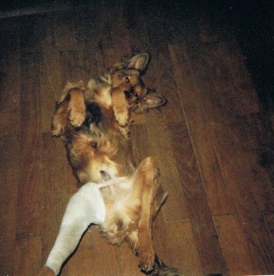 Mon chien Voyou, mes bébés à plumes et compagnie E-et-cie-vouyou-06-2b609b9