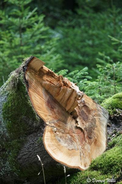 Ballade dans les Hautes fagnes et les sous-bois le 10-08-2011 Img_2703-800x600--2bbd923