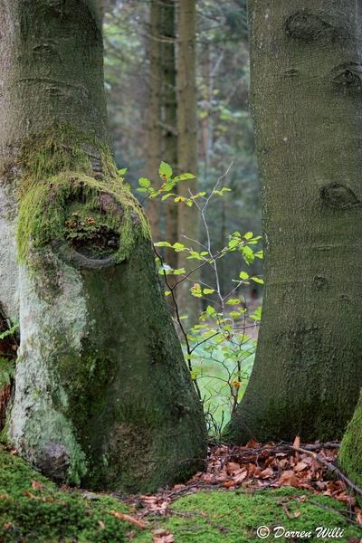 Ballade dans les Hautes fagnes et les sous-bois le 10-08-2011 Img_2691-800x600--2bbd8ee