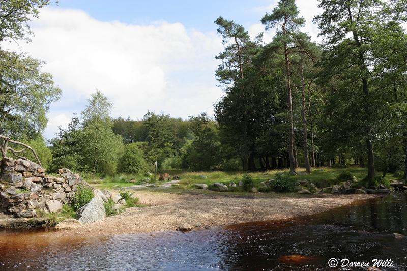 Ballade dans les Hautes fagnes et les sous-bois le 10-08-2011 Img_2621-800x600--2bbd5be