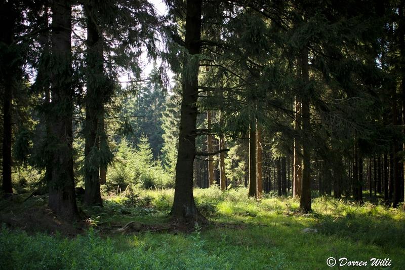 Ballade dans les Hautes fagnes et les sous-bois le 10-08-2011 Img_3036-800x600--2bbdbf1