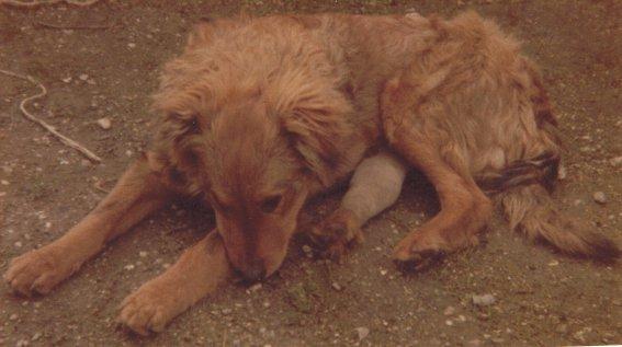 Mon chien Voyou, mes bébés à plumes et compagnie E-et-cie-vouyou-02-2b60945